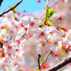 石田晃久 公式ブログ/春が来た4 画像1