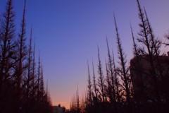石田晃久 公式ブログ/神宮外苑の夕焼け 画像1