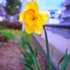 石田晃久 公式ブログ/横浜にも春 画像3
