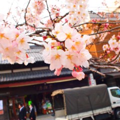 石田晃久 公式ブログ/八幡宮 画像1