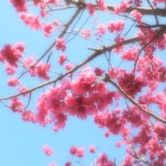 石田晃久 公式ブログ/狛江に春がきた 画像1