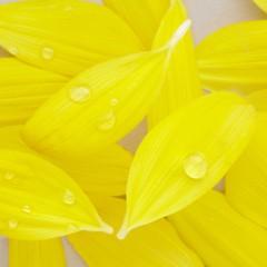 石田晃久 公式ブログ/たくさんの花びら 画像2