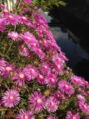 石田晃久 公式ブログ/花の季節 画像2