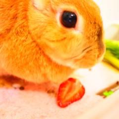 石田晃久 公式ブログ/おすそわけいちご 画像3