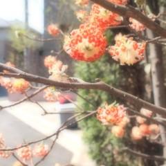 石田晃久 公式ブログ/やっと咲いたよ 画像2