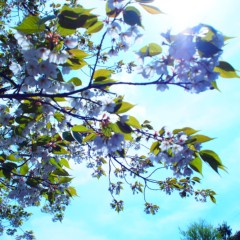 石田晃久 公式ブログ/春が来た6 画像1