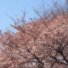 石田晃久 公式ブログ/春が来た2 画像1