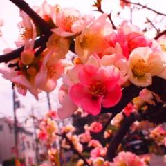 石田晃久 公式ブログ/今日の狛江12 画像1