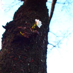 石田晃久 公式ブログ/桜ももうすぐ 画像2