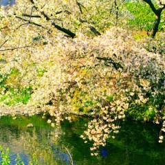 石田晃久 公式ブログ/春が来た3 画像2