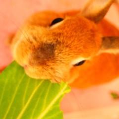 石田晃久 公式ブログ/3時のおやつ 画像1