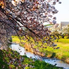 石田晃久 公式ブログ/春が来た2 画像3