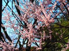 石田晃久 公式ブログ/春が来た 画像3