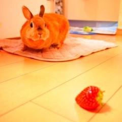 石田晃久 公式ブログ/おすそわけ 画像1