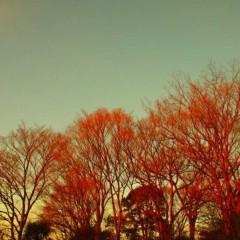 石田晃久 公式ブログ/春よこい 画像1