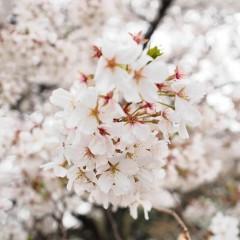 石田晃久 公式ブログ/新宿御苑 画像2