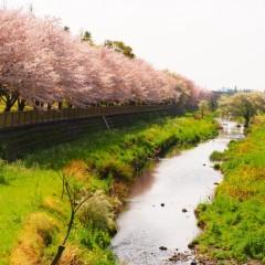石田晃久 公式ブログ/春が来た5 画像1