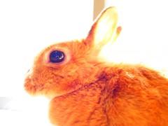 石田晃久 公式ブログ/ごはんですよ 画像1