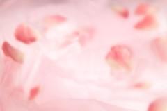 石田晃久 公式ブログ/真珠を撮影しました 画像1