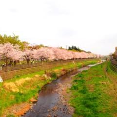 石田晃久 公式ブログ/桜満開2 画像1