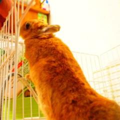 石田晃久 公式ブログ/最近牧草食べてます 画像3
