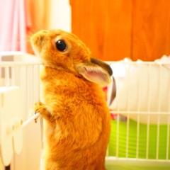 石田晃久 公式ブログ/おはよウサギ 画像3