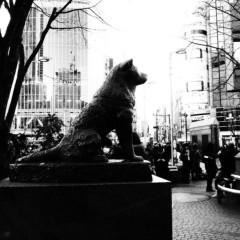 石田晃久 公式ブログ/ハチ公 画像1