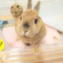 石田晃久 公式ブログ/今日は落ち着いています 画像3