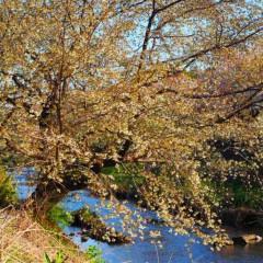 石田晃久 公式ブログ/春が来た2 画像2