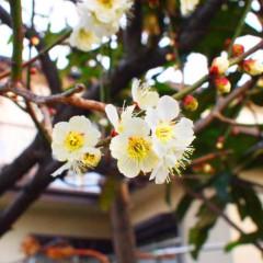石田晃久 公式ブログ/春がきているね 画像1