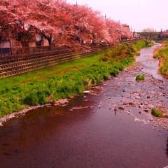 石田晃久 公式ブログ/桜咲くラストスパート 画像2