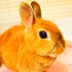 石田晃久 公式ブログ/最近牧草食べてます 画像1