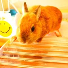 石田晃久 公式ブログ/おやつをダッシュのうさぎチャイ 画像2