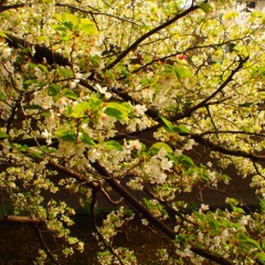 石田晃久 公式ブログ/春が来た5 画像3