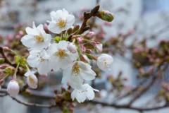 石田晃久 公式ブログ/春がきた 画像1