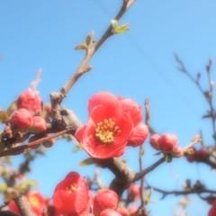 石田晃久 公式ブログ/狛江に春がきた 画像2