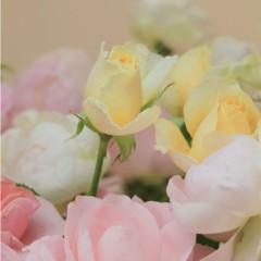 石田晃久 公式ブログ/西村由紀恵CDジャケット撮影快調 画像1