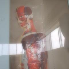 石田晃久 公式ブログ/人体模型 画像1