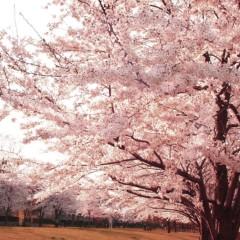 石田晃久 公式ブログ/春が来た3 画像1
