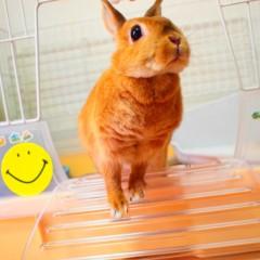 石田晃久 公式ブログ/私の朝食 画像1
