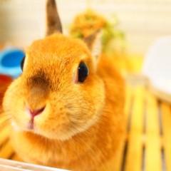 石田晃久 公式ブログ/おはよウサギ 画像1