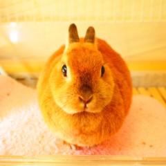 石田晃久 公式ブログ/おやつをダッシュのうさぎチャイ 画像1