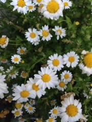 石田晃久 公式ブログ/花の季節 画像1