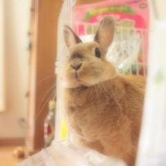 石田晃久 公式ブログ/おはよう。 画像1