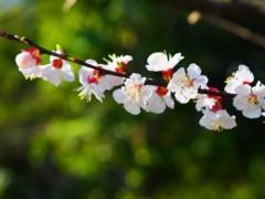 石田晃久 公式ブログ/春が来た 画像2