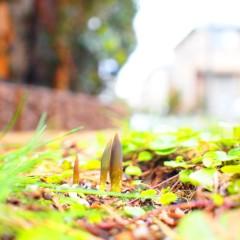 石田晃久 公式ブログ/雨上がり! 画像1