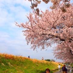 石田晃久 公式ブログ/桜満開 画像1