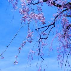 石田晃久 公式ブログ/春が来た6 画像2