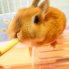 石田晃久 公式ブログ/私の朝食 画像3