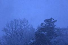 石田晃久 公式ブログ/初雪 画像2